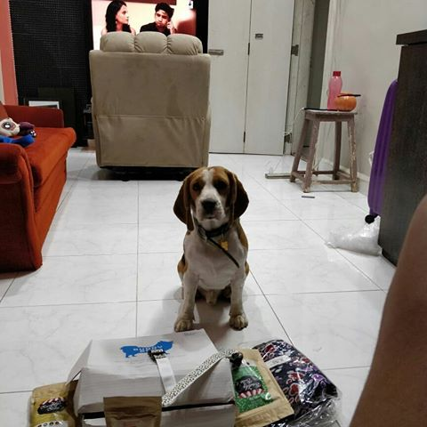 Max-Beagle-buddy-box