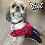 Heart-denim-dress-for-dogs-cotton-marsha-and-buddy