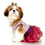 purple-haze-dress-for-dogs
